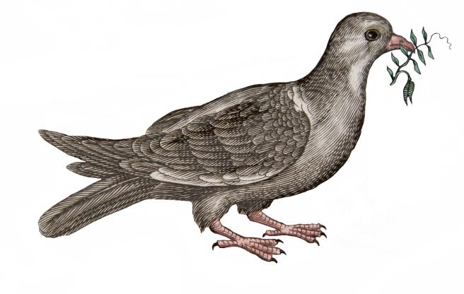 SBT SR_OS 97  JON Historiae naturalis (Dove)