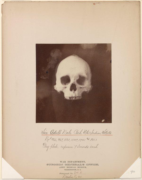 Ute Indian Skull